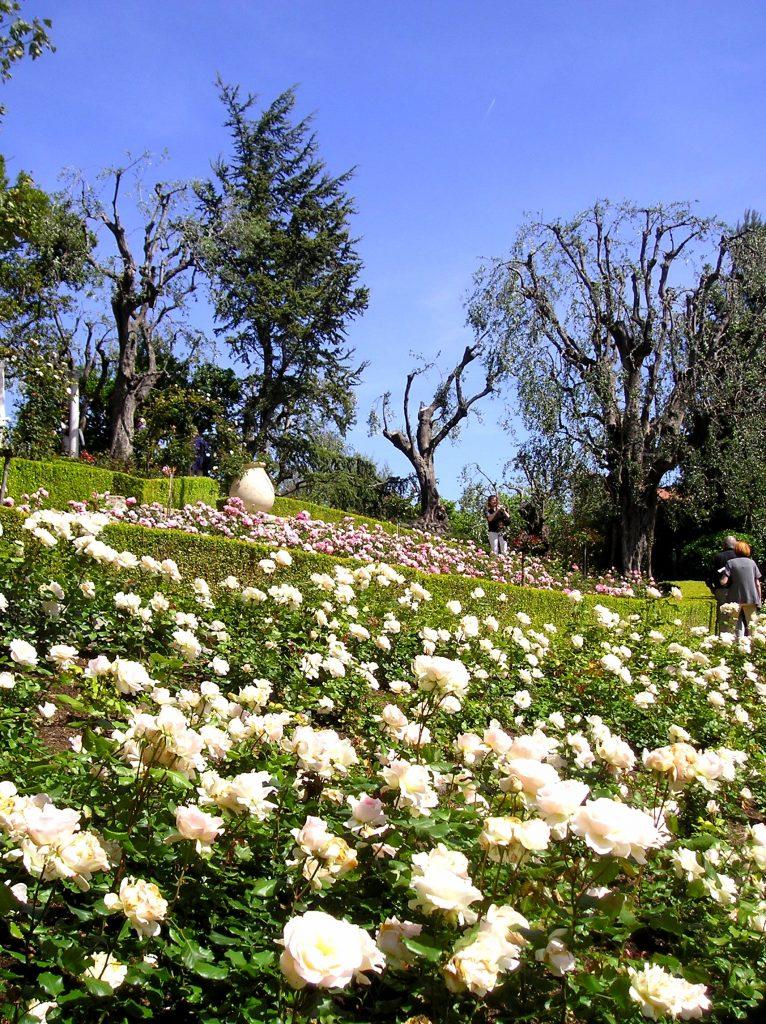 Il giardino delle rose Villa Ephrussi de Rothschild Costa Azzurra