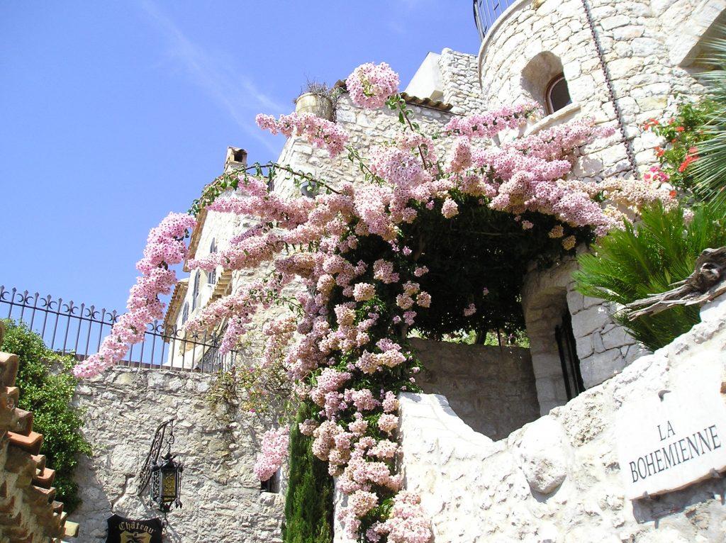 fiori della Costa Azzurra